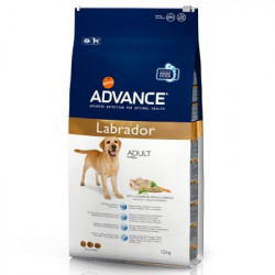 Advance Labrador Adult