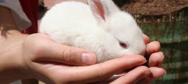 Tipos de jaulas para conejos – Adáptate a tu mascota
