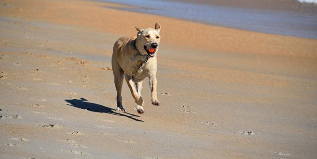 dog-1680870_640