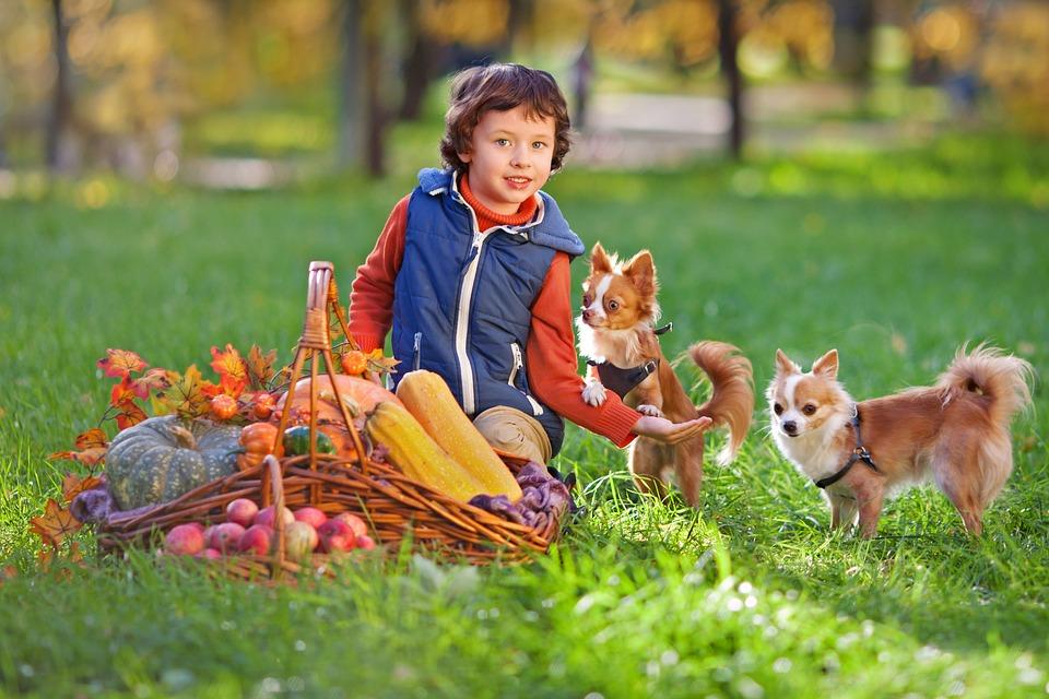 Niño Y perros