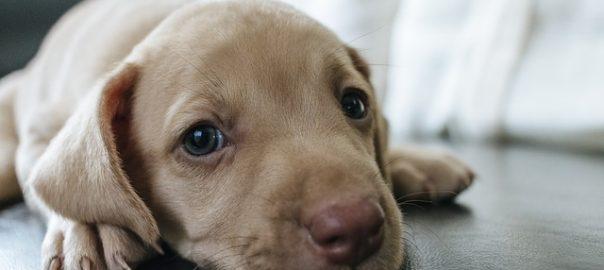 Recomendaciones para educar a un cachorro