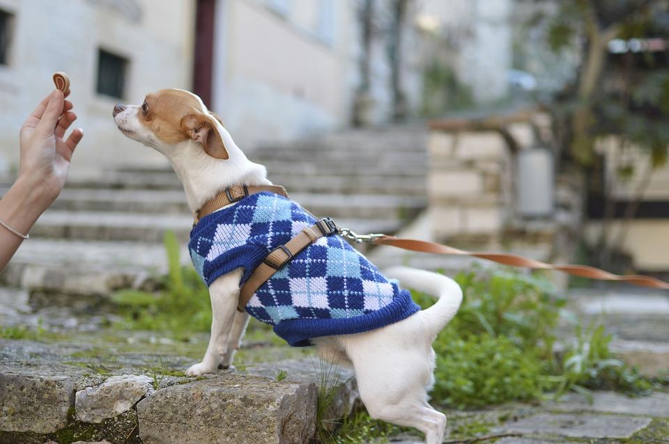 Cambio Dieta perros