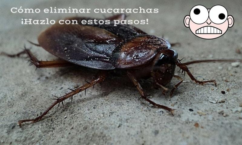¿Cómo eliminar cucarachas ¡Házlo en 4 pasos!.jpg