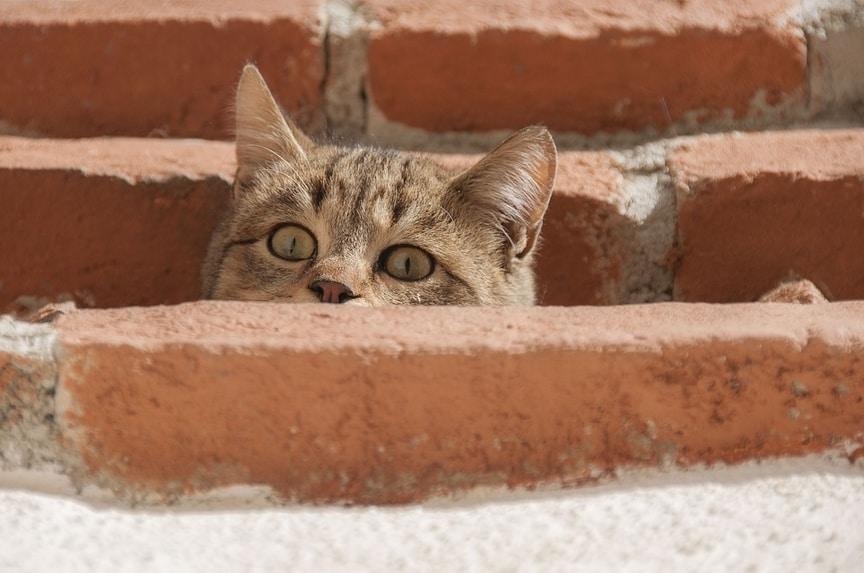 como capturar a un gato de la calle