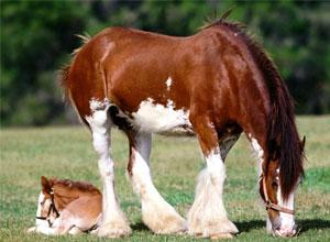 Adiestramiento de nuestro caballo