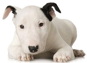 Perros con estómago delicado