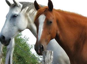 alimentacion-caballos