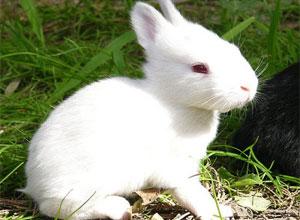 Alimentación de nuestros conejos