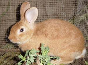 Alimentación para nuestros conejos