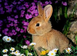 Alimentación natural y piensos para conejos