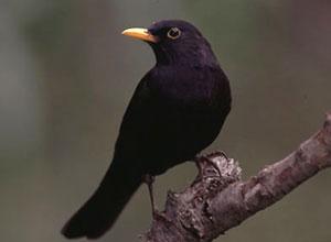aves-huerto