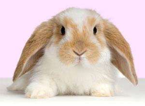 Características y reproducción de los conejos