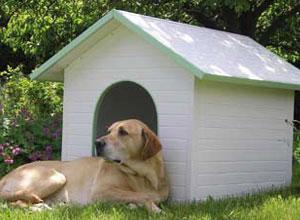 Caseta grande para perro