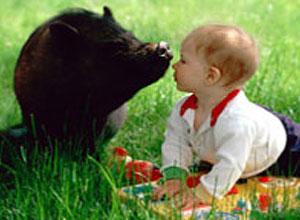 Cerdo vietnamita con bebe