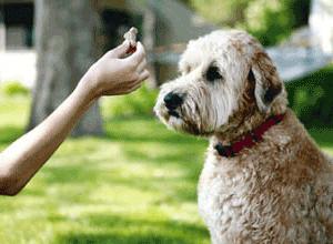 Comportamiento de tu perro