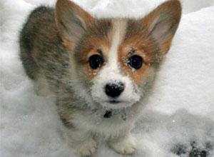 Cuidados para la piel de nuestros perros