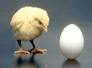 Diccionario de los términos más habituales en la avicultura familiar