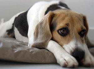 Educación y comportamiento de nuestro perro