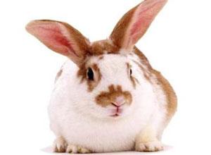 Enfermedades comunes en conejos y gallinas