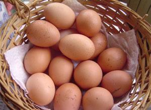 Producción de huevos caseros en gallinas ponedoras