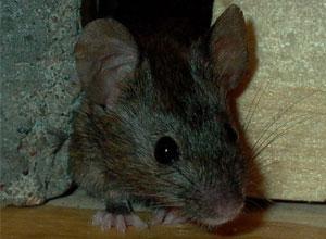 Plagas y pequeñas invasiones de animales en nuestro huerto